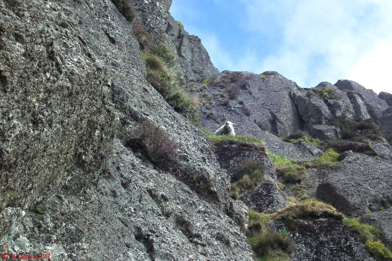 03 Pavey Ark Sheep.jpg